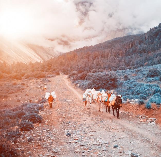 Trekking w nepalu