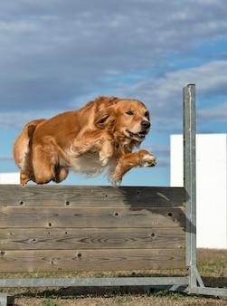 Trening posłuszeństwa dla psa