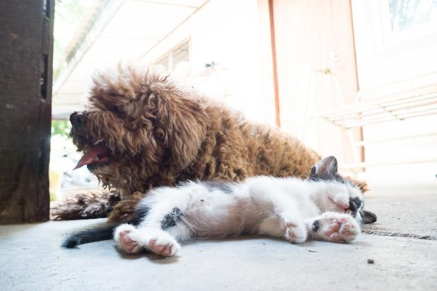 Trochę słabo kota śpiącego i psa puddle.