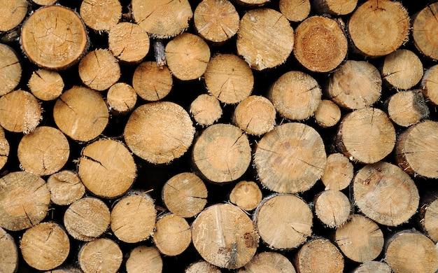 Troncos de madera apilados