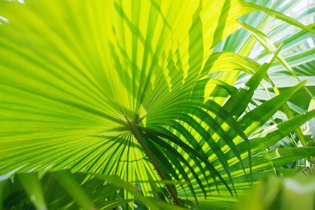 Tropical palm leafes gałęzie sun light natural