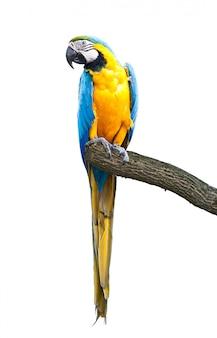 Tropikalna ara