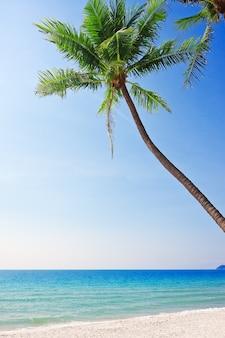 Tropikalna biała piaszczysta plaża z palmami.