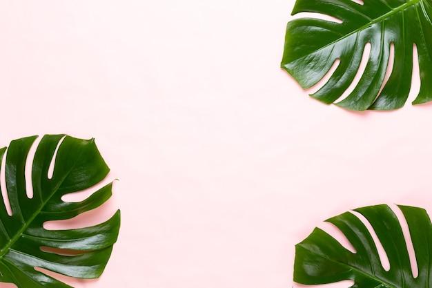 Tropikalna dżungla liść, monstera, spoczywa na płaskiej powierzchni, na tle brzoskwini.