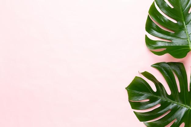 Tropikalna dżungla liść, monstera, spoczywająca na płaskiej powierzchni