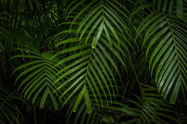 Tropikalna dżungla, tropikalny las deszczowy z różnymi drzewami.