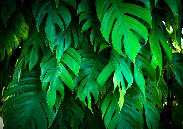 Tropikalna natura zielony monstera liści palmowych wzór