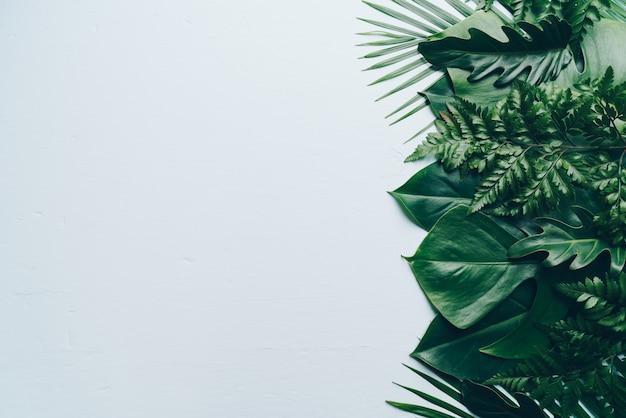 Tropikalna palma opuszcza na koloru tle z copyspace