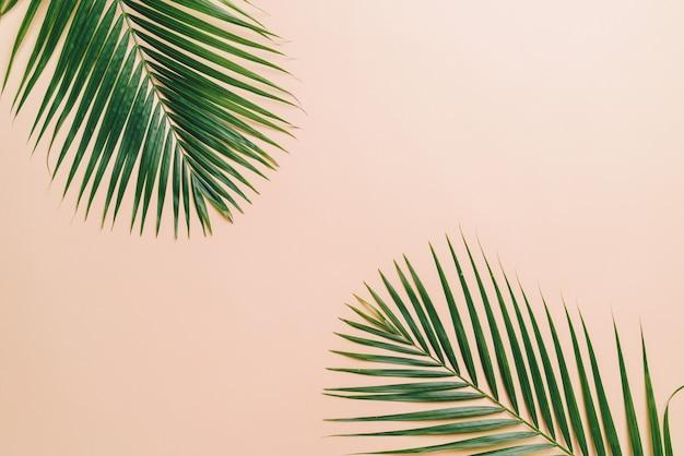 Tropikalna palma opuszcza z copyspace tłem