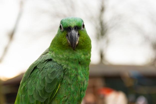 Tropikalna papuga na śniadanio-lunch, zoo. ptaki kolorowe egzotyczne ptaki.