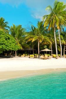 Tropikalna piaszczysta plaża z palmami. wyspa malediwy