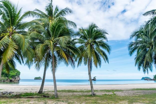 Tropikalna plaża i biały piasek latem z palmami i jasnoniebieskim niebem