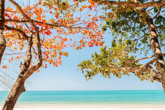 Tropikalna plaża i drzewa