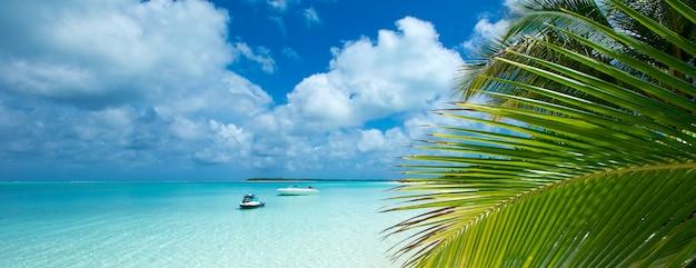 Tropikalna plaża na malediwach z kilkoma palmami i błękitną laguną