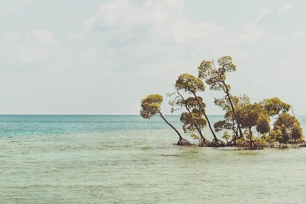 Tropikalna plaża z białym piaskiem, jukami i palmami kokosowymi. położony w północnej części plaży habaraduwa, w pobliżu małego miasteczka koggala. południowe wybrzeże jest bardzo popularne wśród surferów. tonowanie retro