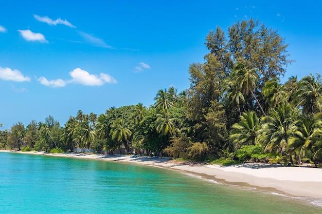 Tropikalna plaża z palmami na wyspie koh samui, tajlandia