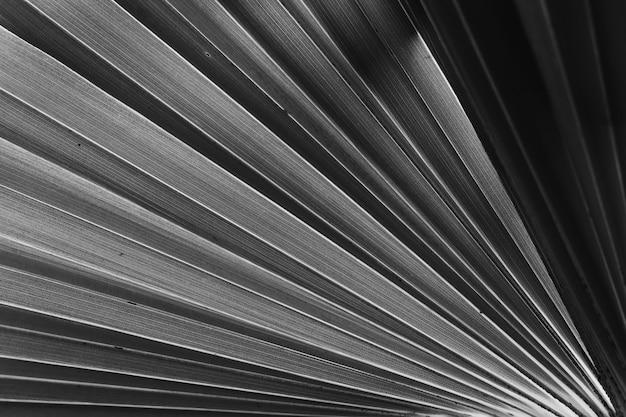 Tropikalna tekstura liści palmowych to abstrakcyjne tło, czarno-biały filtr