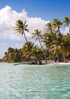 Tropikalna wyspa z palmami na morzu