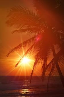 Tropikalna zmierzch scena z palmami