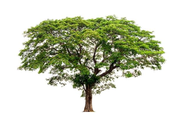 Tropikalne drzewo na białym tle plik zawiera ścieżkę przycinającą tak łatwą w obsłudze