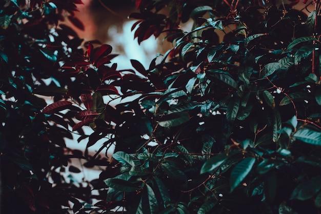 Tropikalne drzewo w parku tropikalny filtr kolorów