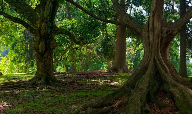 Tropikalne dżungle azji południowo-wschodniej