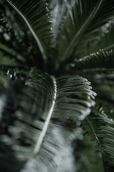 Tropikalne gałęzie palm z teksturą liści. koncepcja roślinności w gorącym klimacie.