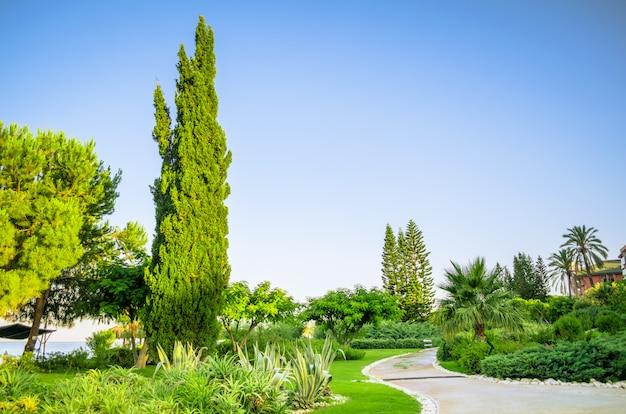 Tropikalne krajobrazy z sadzeniem i drzewami