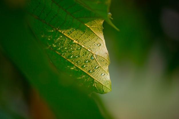 Tropikalne lasy deszczowe rośliny liści krzewy paprocie zielone liście filodendrony i rośliny tropikalne