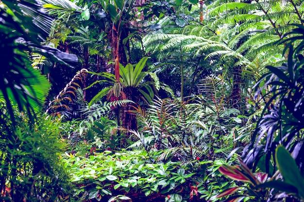 Tropikalne lasy deszczowe