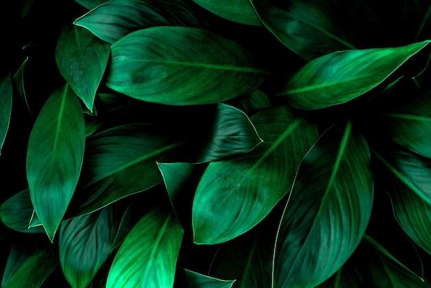 Tropikalne liście abstrakcyjne zielone liście tekstura natura tło
