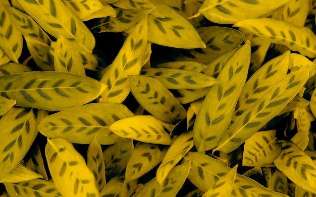 Tropikalne liście abstrakcyjne zielone liście tekstura tło natura