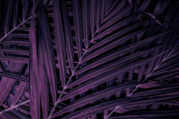 Tropikalne liście egzotyczne palmowe liście abstrakcyjny naturalny wzór ciemny natura tło czerwone i fioletowe