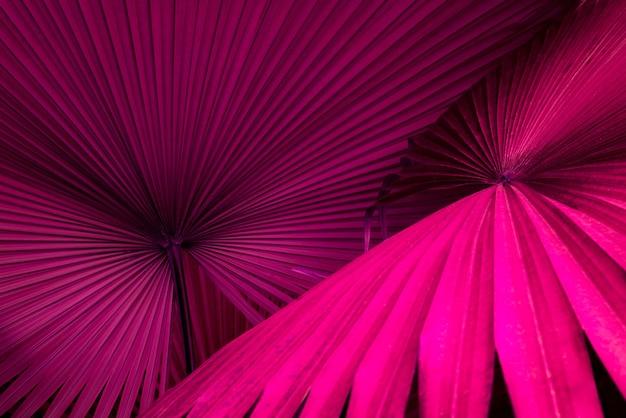 Tropikalne liście egzotyczne palmowe liście abstrakcyjny naturalny wzór ciemny natura tło niebieski i pur
