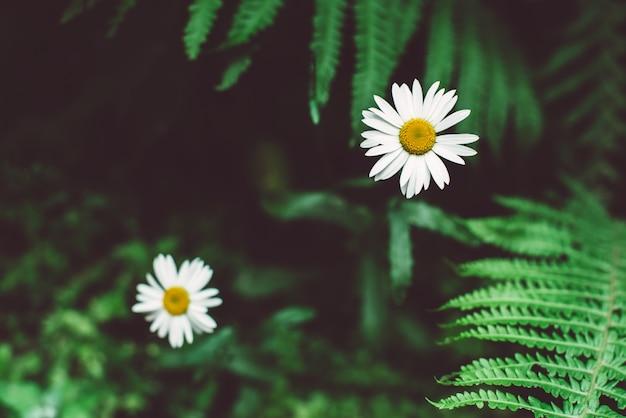 Tropikalne liście i biały kwiat, ciemne tło kwiatowy