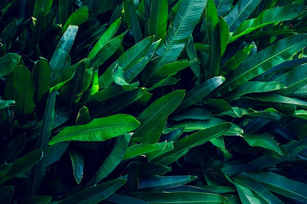 Tropikalne liście kolorowy kwiat na ciemnym tle tropikalnych liści natura ciemnozielone liście natura