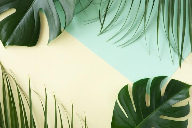 Tropikalne liście monstera na różowym tle. leżał płasko, widok z góry