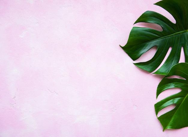 Tropikalne liście monstera