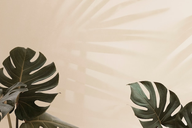 Tropikalne liście monstery z cieniem liści palmowych