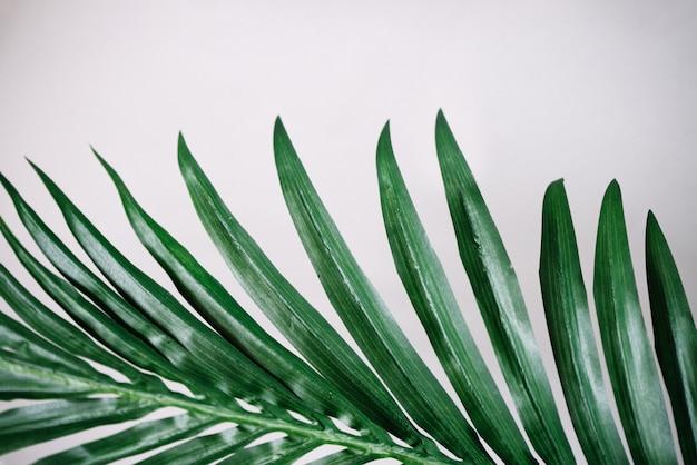Tropikalne liście na białej powierzchni ściany