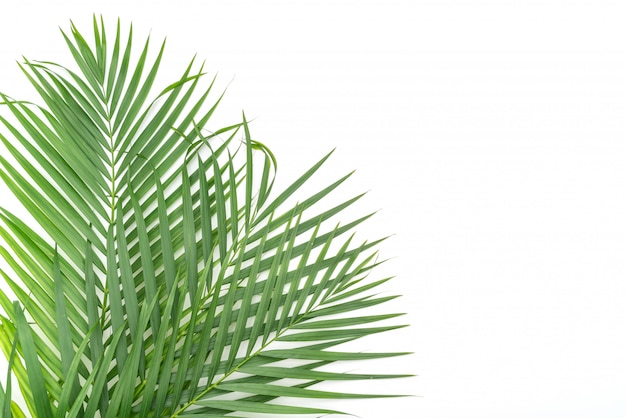 Tropikalne liście na białym tle