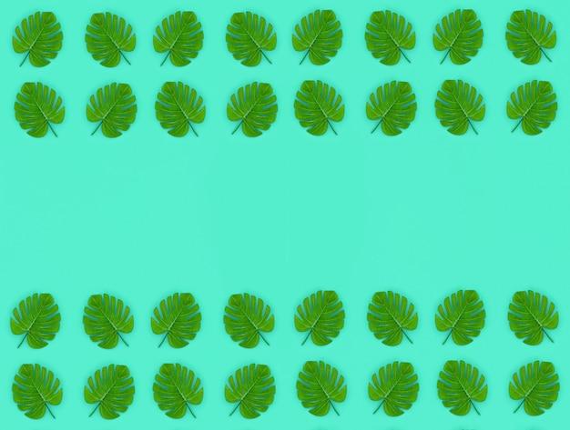 Tropikalne liście palmowe monstera leżą na pastelowym kolorowym papierze