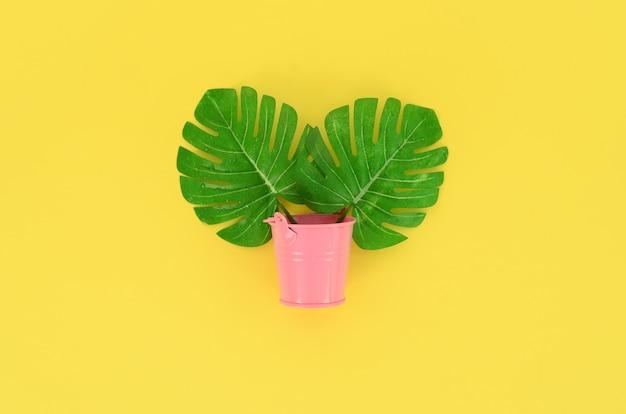 Tropikalne liście palmowe monstera leżą w pastelowym wiadrze na kolorowym. flat lay modna minimalna kompozycja. widok z góry