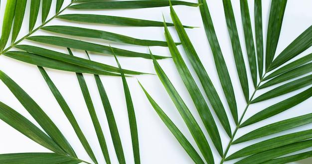 Tropikalne liście palmowe na białym tle.