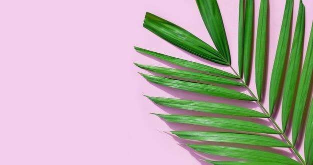 Tropikalne liście palmowe na różowym tle.