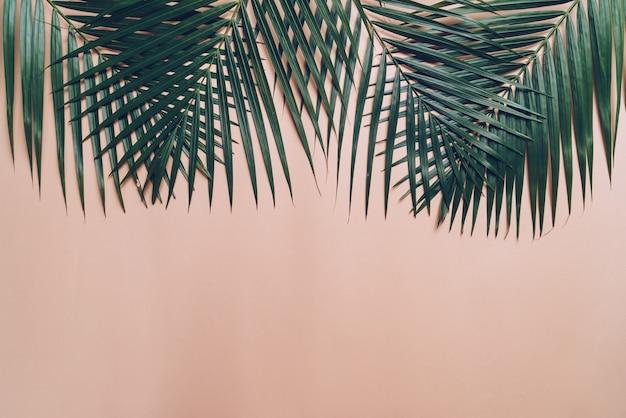 Tropikalne liście palmowe z miejsca na kopię