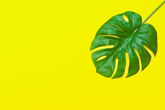 Tropikalne liście palmowe z pustą przestrzenią w środku