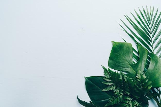 Tropikalne liście palmowe