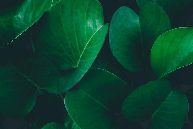 Tropikalne liście streszczenie zielone liście tekstura tło natura