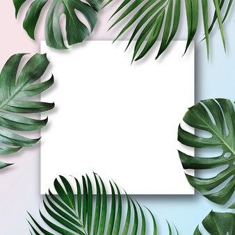 Tropikalne liście z białą pustą przestrzenią pośrodku